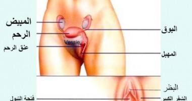 Explain the vagina female