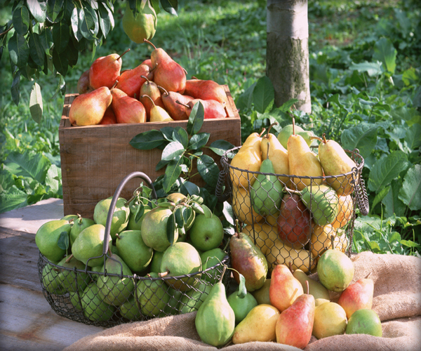 Integrated-Health-Food